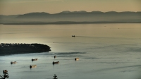 Vancouver Island in the mist