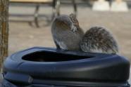 scratching squirrel